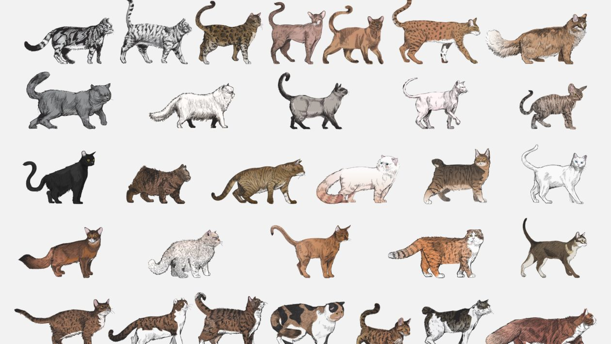 Różne gatunki kotów, czyli podcastów